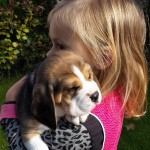 van_numaga_beagles_pups_indy02