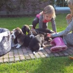 van_numaga_beagles_pups_indy05