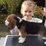 van_numaga_beagles_pups_indy_17
