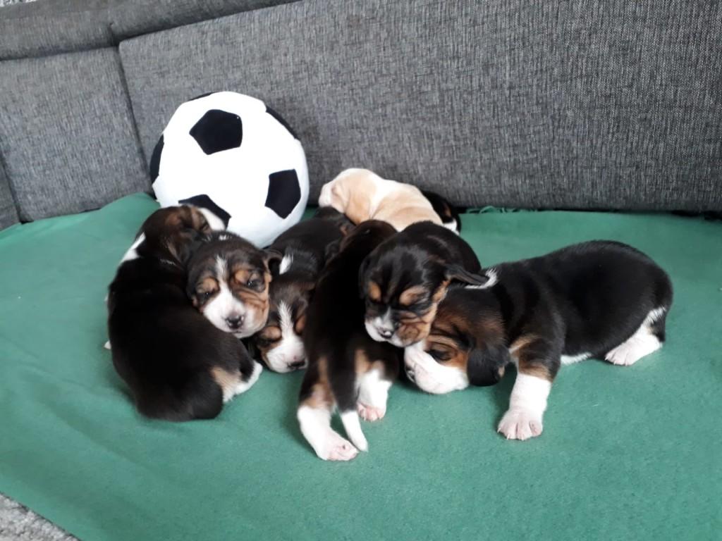 Pups 2019