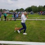 beagleclub_jonge_hondendag_2019_5